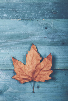 Autumn leaf on blue wood - RTBF000336
