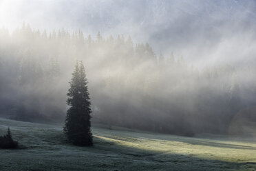 Italy, Dolomites, forest and alpine meadow in the fog - RUEF001739