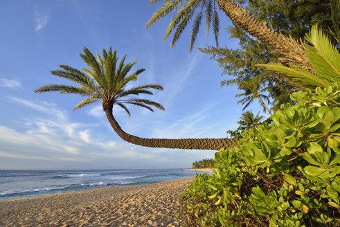 USA, Hawaii, Oahu, palm trees on the beach - RUEF001760
