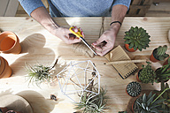 Plant collector preparing the pendant for an air plant - RTBF00358