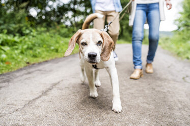 Portrait of dog on a walk with owners - HAPF00876
