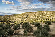 Spain, Andalusia, hills and olive groves - JASF01136