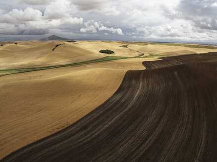 USA, Washington State, Palouse hills, wheat field during harvesttime - BCDF00026