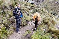 Peru, Cordillera Blanca, Huaraz, Huascaran National Park, hiker on a mountain path with a cow - GEMF01049