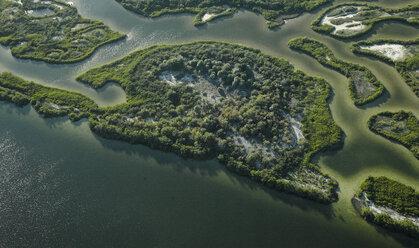 USA, Florida, Aerial photograph of mangroves and sandbars along the western coastline of Tampa Bay - BCDF00072