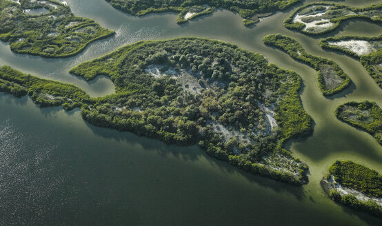 USA, Florida, Aerial photograph of mangroves and sandbars along the western coastline of Tampa Bay - BCDF00072
