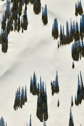 USA, Idaho, Aerial photograph of trees and shadows atop a field in the Grand Teton mountains - BCDF00144