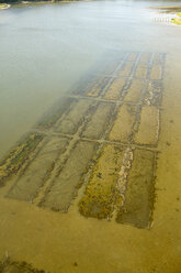 USA, Aerial photograph of clam bed aquaculture on the Eastern Shore of Virginia - BCDF00147