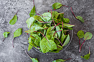 Wire basket of baby chard leaves - SARF02929