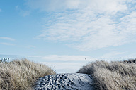 Denmark, Hals, dunes at the Baltic Sea - MJF02022