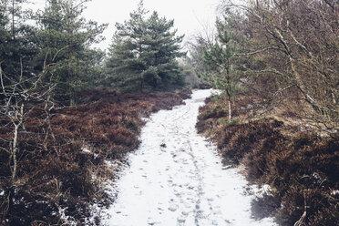 Denmark, Hals, coastal path in winter - MJF02082