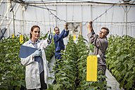 People working in greenhouse - ZEF10437