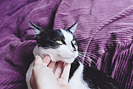 Woman's hand stroking black and white cat - GEMF01080