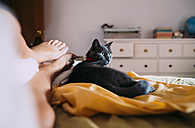Russian Blue lying on bed besides feet of owner watching somrehing - GEMF01109