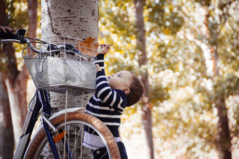 Toddler taking autumn leaf from bike - JPSF00021