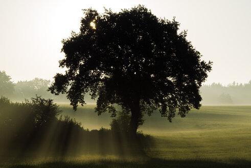 Germany, Upper Bavaria, Landsberied, Backlit tree at sunrise - GNF01363