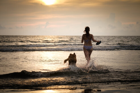 Mexico, Nayarit, Young woman in bikini playing frisbee with her Golden Retriever dog at the beach, running into the ocean - ABAF02085