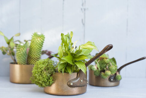 Succulents, cacti and spathiphyllum planted in metal pots - GISF00256