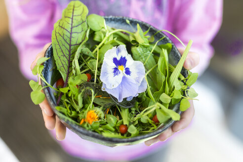 Girl's hands holding bowl of wild-herb salad with edible flowers, cranberries and wolfberries - SARF03007