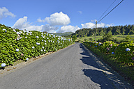 Portugal, Azores, Sao Miguel, Road with hortensias - RJF00626