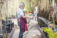 Elderly gardener watering plants in garden centre - ZEF10998