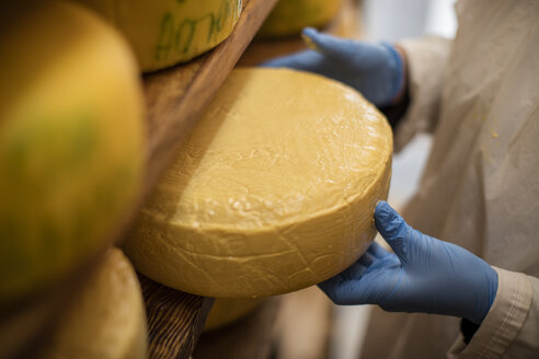 Cheese factory worker controlling maturation of cheese - ZEF11025