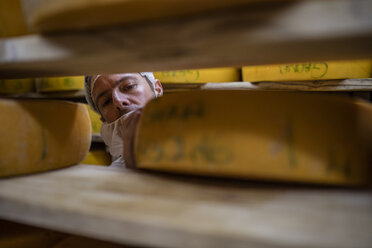 Cheese factory worker controlling maturation of cheese - ZEF11058