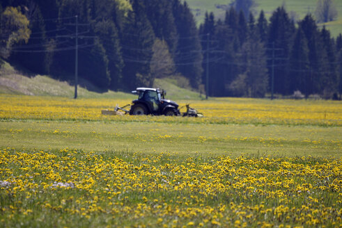 Tractor on a field behind a dandelion meadow - GNF01371