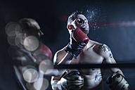 Boxer hitting opponent - ZEF11085