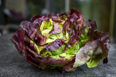 Red butterhead lettuce, close up - SARF03021