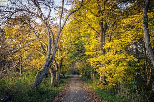 Germany, Hesse, Moerfelden-Walldorf, Moenchbruch, autumnal forest track - MPAF00082