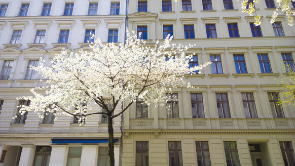 Germany, Berlin, Blossoming tree in spring - CMF00589