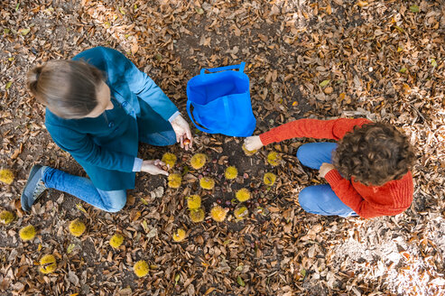 Top view of mother and son collecting sweet chestnuts in the forest - DIGF01410