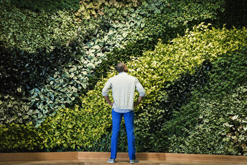 Young man standing in front of green plant wall, rear view - WESTF21884