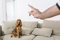 Man teaching dog at home - MADF01201
