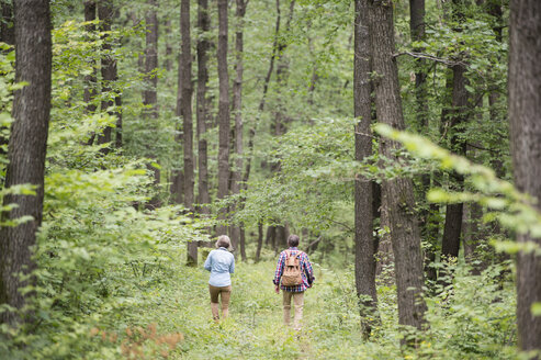 Back view of senior couple walking in the woods - HAPF01077