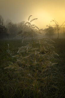 Germany, Hesse, Early morning at Kuehkopf Nature Reserve - MPAF00093