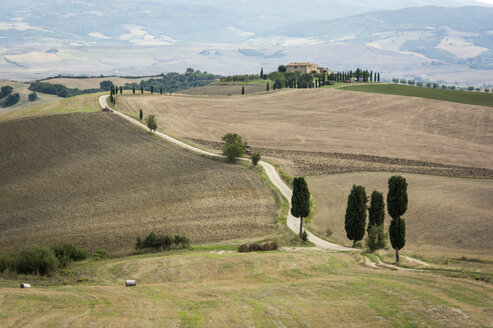 Italy, Tuscany, Val d'Orcia, tree-lined road near Pienza - PAF01736