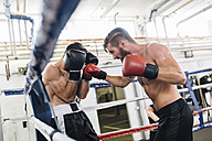 Two boxers fighting in boxing ring - MADF01250