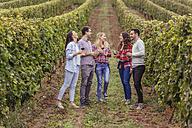 Happy friends in a vineyard - ZEDF00417