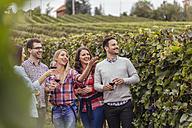 Happy friends in a vineyard - ZEDF00420