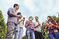 Friends in a vineyard holding glasses of red wine - ZEDF00423
