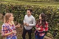 Friends in a vineyard holding glasses of red wine - ZEDF00426