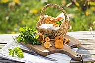 Basket of Chanterelles and flat leaf parsley - YFF00591