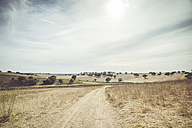 Portugal, Setubal, Field with trees - CHPF00324
