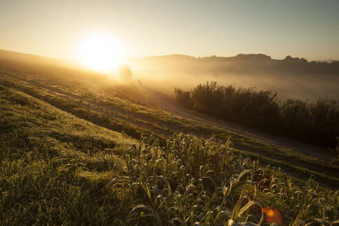 Italy, Tuscany, sunrise in rolling landscape near Lucca - FCF01123