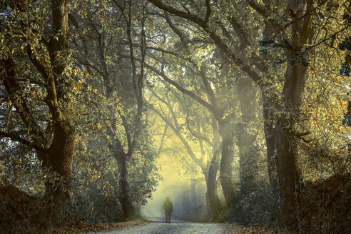 Italy, Tuscany, Val d'Orcia, person on tree-lined road in morning fog - FCF01136