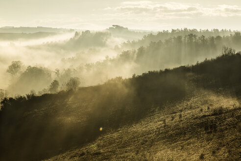 Italy, Tuscany, Val d'Orcia, landscape in morning fog - FCF01145