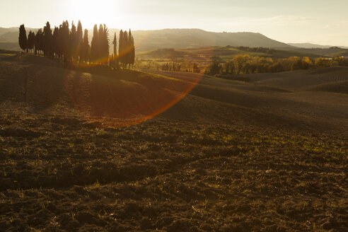 Italy, Tuscany, Val d'Orcia, rolling landscape with group of trees - FCF01151