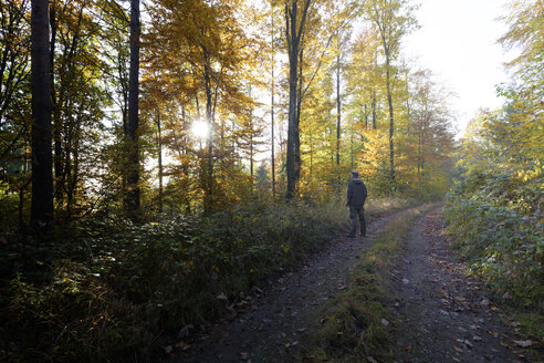 Back view of man standing on forest track in autumn - ALF00718